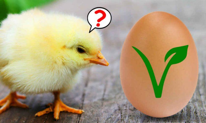 Nace el huevo vegano