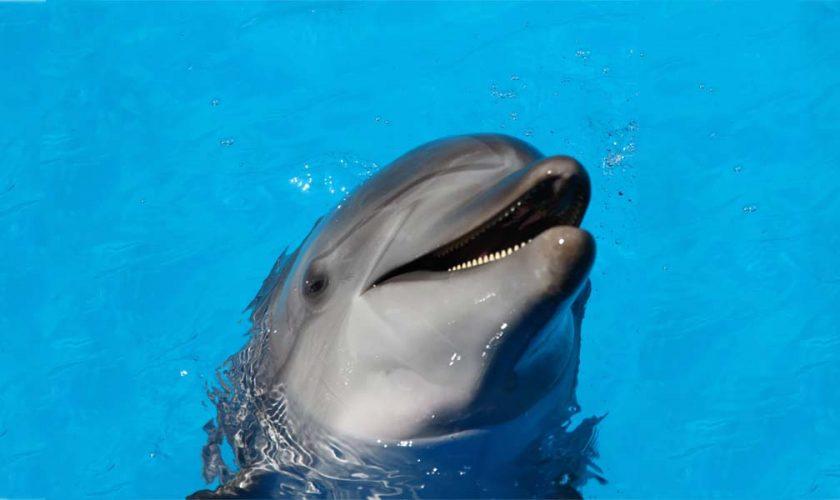 Delfinarios prohibidos en Ciudad de México