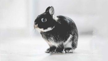 Experimentación animal en cosmeticos