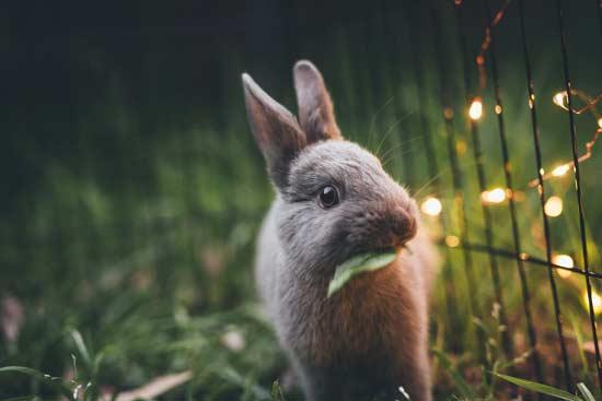 Iniciativa de la Unión Europea para prohibir los tests sobre animales para cosméticos en todo el mundo
