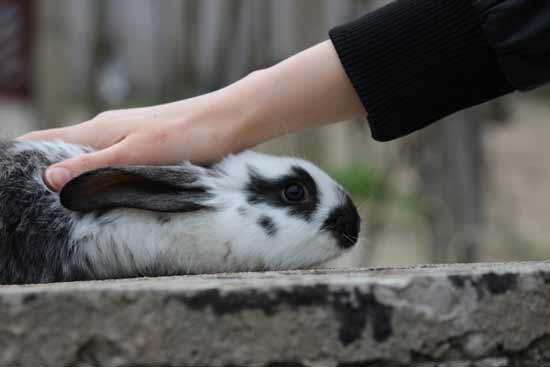 Desde 2013 la Unión Europea veta los tests sobre animales para cosmeticos