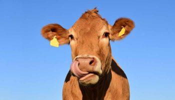 industria-carne-vaca