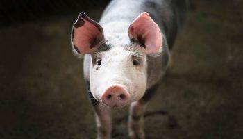 Mejores-documentales-veganos