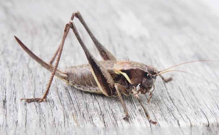 ¿Los veganos pueden comer insectos?