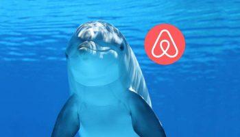 Airbnb-experiencias-animales
